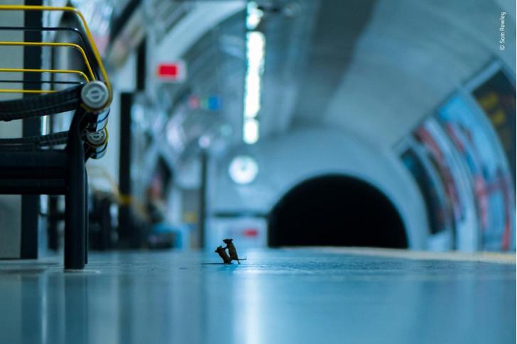 Фото №1 - Стычка на платформе