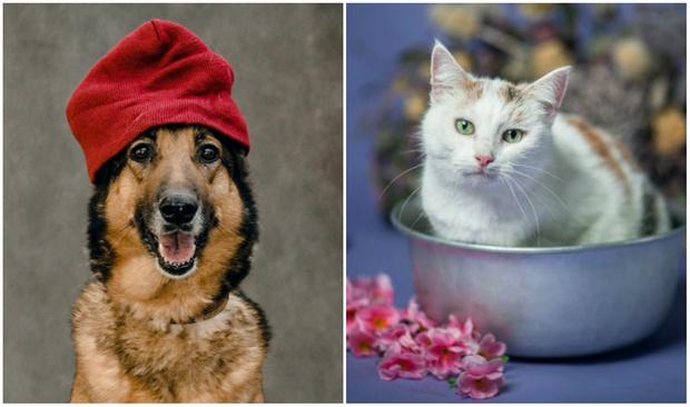 Фото №1 - Котопёс недели: возьми из приюта собаку Тростинку или кошку Стешу