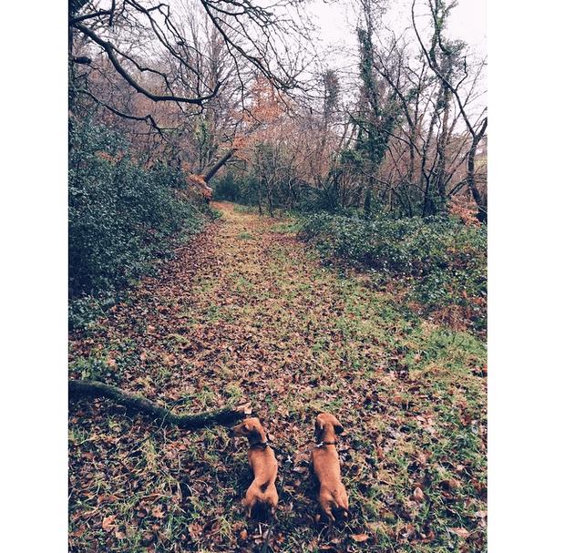 Фото №6 - Звездный Instagram: Сказки леса