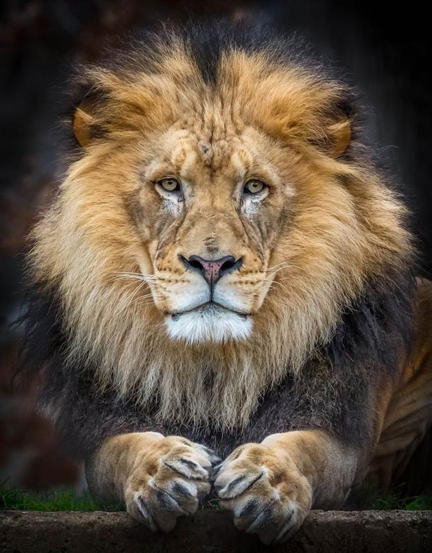Фото №2 - Фотограф часами выжидал животных ради серии снимков, на которых они смотрят тебе прямо в глаза