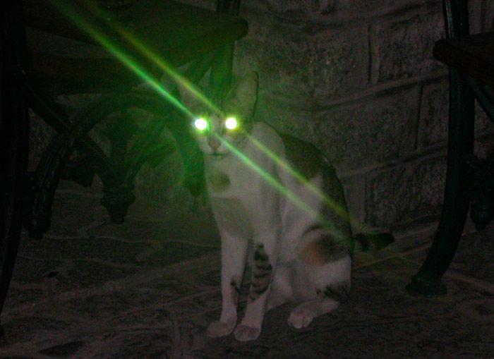 Фото №19 - 20 мемных котов, похожих на известных режиссеров