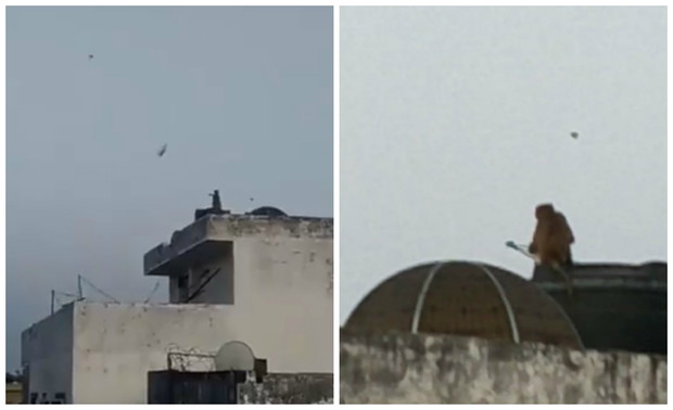 Фото №1 - Обезьяна, запускающая воздушного змея, попала на видео