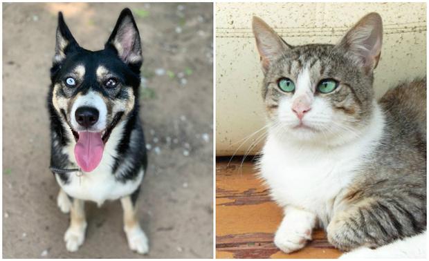 Фото №1 - Котопёс недели: собака Майна и кот Прапор ждут своих хозяев