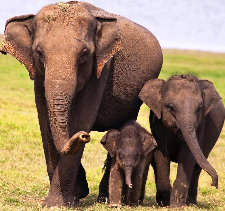 Фото №25 - Последние: семейства млекопитающих, которым грозит исчезновение