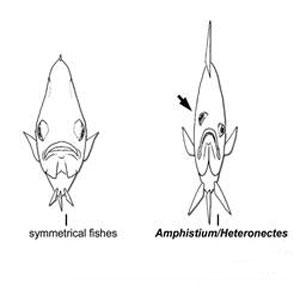 Фото №1 - Рыба на ступенях эволюции