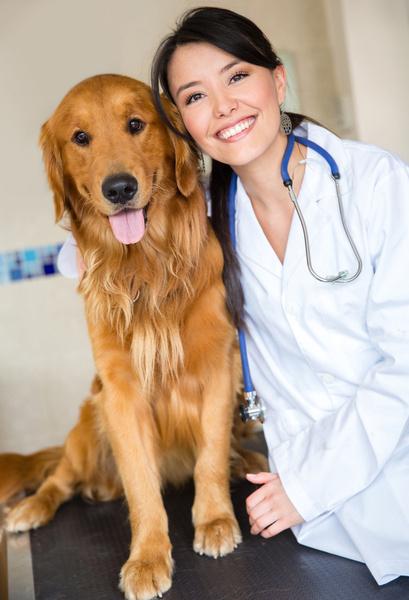 Фото №1 - Ученые утверждают, что собаки чуют рак