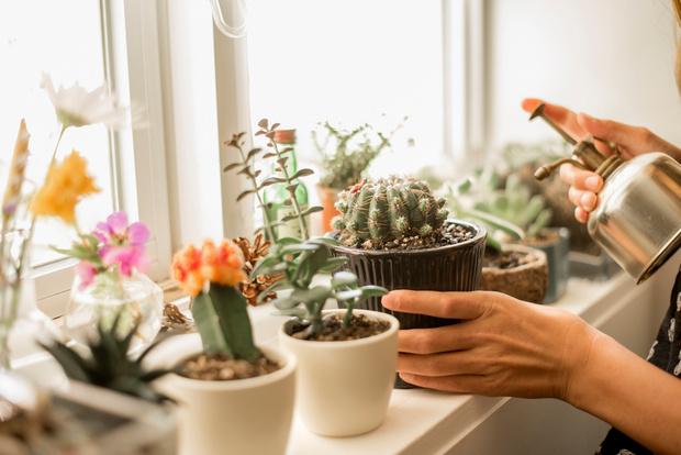 Фото №1 - Поберегись! 55 самых ядовитых комнатных растений