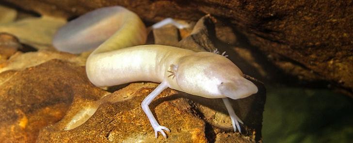Фото №1 - Ученые вычислили самое ленивое существо на Земле