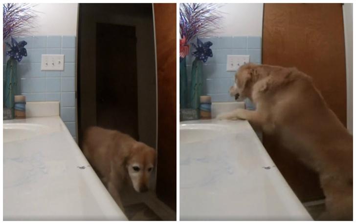 Фото №1 - Пес придумал, как не бояться грома, петард и других громких звуков (видео)
