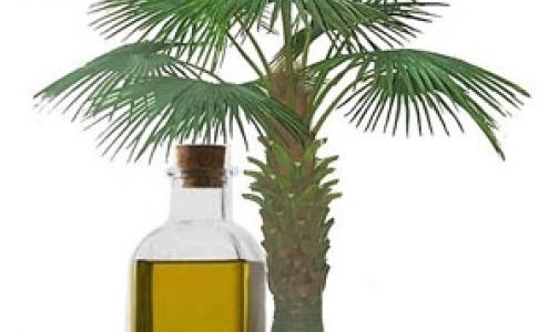 Фото №1 - Как влияет на наш организм пальмовое масло, которое сейчас активно добавляют в продукты