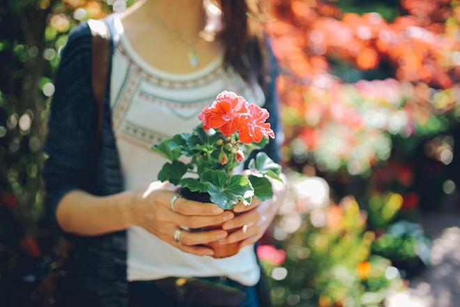 Фото №1 - Зарядись! 10 растений, которые улучшают самочувствие
