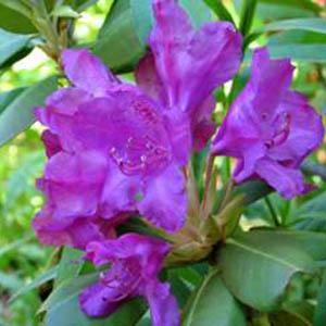 Фото №1 - Не расцвели цветы лазоревые