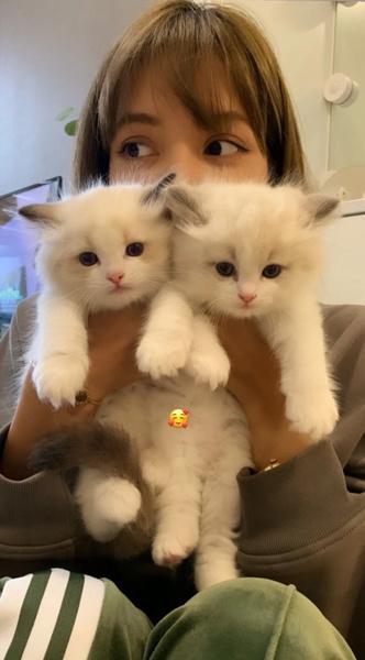 Фото №7 - BLACKPINK и котики: 8 фото Лисы, на которых хочется забрать обоих себе 😍