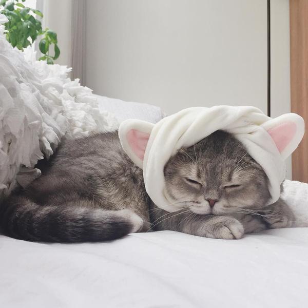 Фото №3 - Инста дня: Этот кот про моду знает больше, чем ты 😂