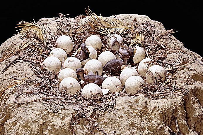 Фото №2 - Твердые улики: как ученые восстанавливают облик давно вымерших животных