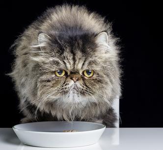 Фото №2 - Как помириться с обиженным на тебя котом или собакой
