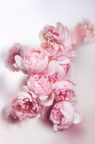 Фото №4 - Аромат дня: Heures d'Absence от Louis Vuitton