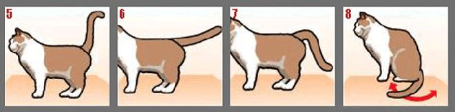 Фото №2 - Как понять кошку по хвосту
