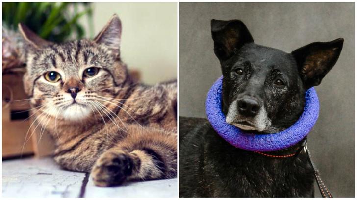 Фото №1 - Котопёс недели: кот Коржик и пес Уголёк