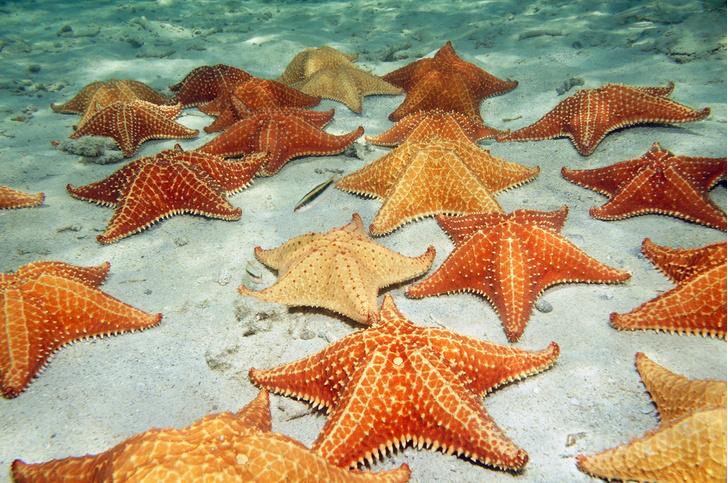 Фото №1 - Морские звезды способны самостоятельно избавляться от инородных тел