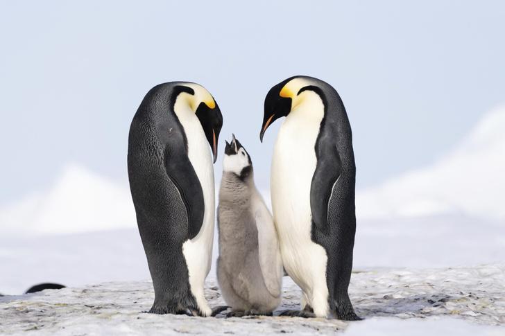 Фото №6 - Почему пингвины не летают
