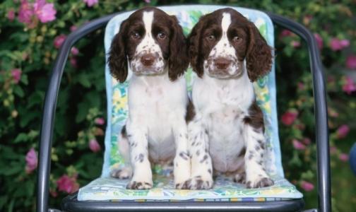 Фото №1 - Собаки снижают риск атопического дерматита у детей