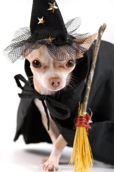 Фото №14 - Фотоподборка недели: собаки, которые уже готовы к Хэллоуину