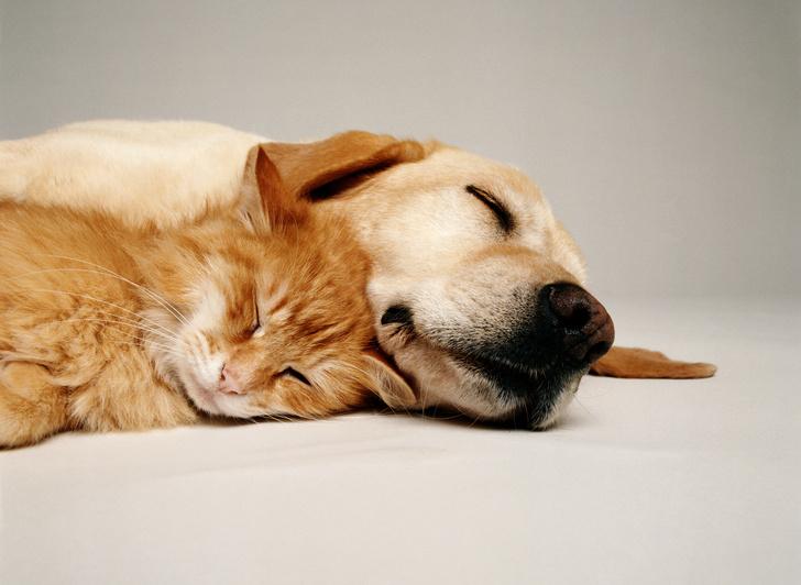 Фото №1 - В Китае запретили есть кошек и собак