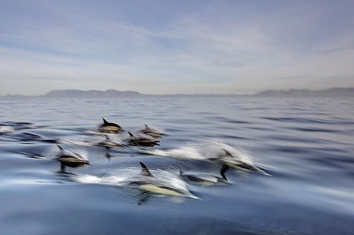 Фото №1 - Цифры: Дети моря