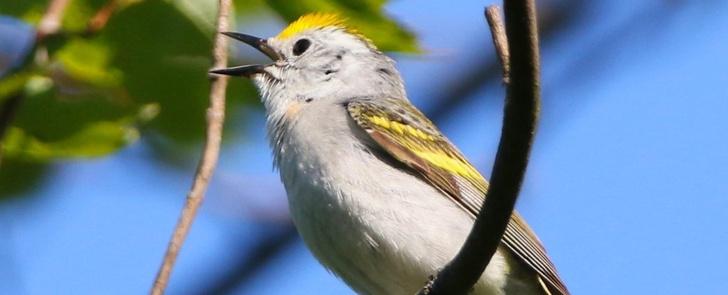 Фото №1 - В дикой природе обнаружен гибрид трех видов птиц