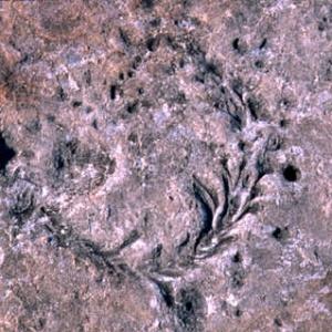Фото №1 - Первые рептилии на Земле появились 315 млн лет назад
