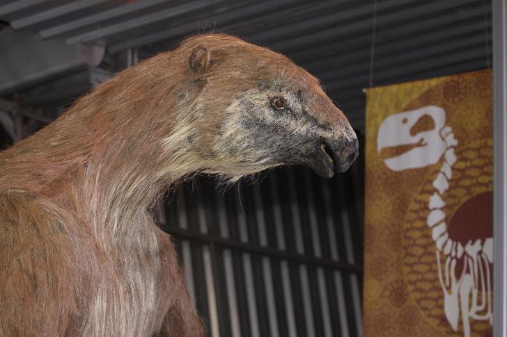 Фото №1 - Как исчез гигантский ленивец