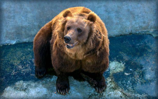 Фото №1 - В Московском зоопарке проснулись медведи