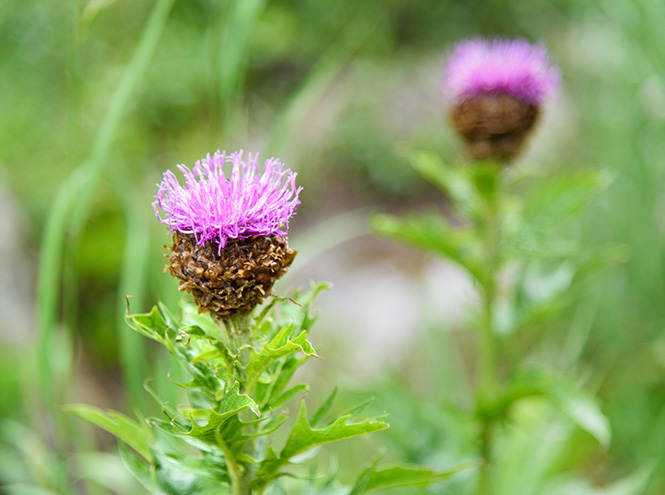 Фото №11 - Самые полезные лекарственные травы
