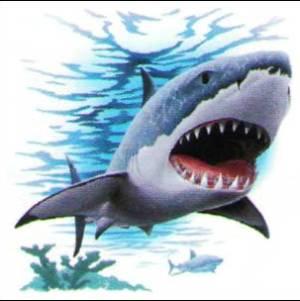 Фото №1 - В Турцию приплыли акулы