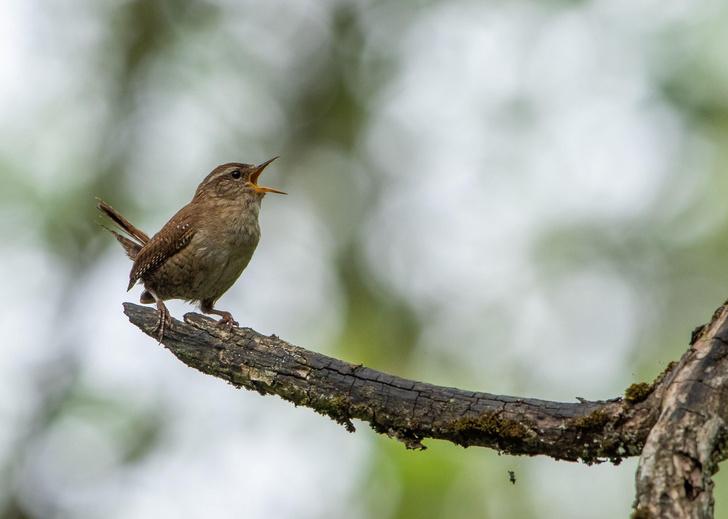 Фото №1 - Ученые нашли связь между счастьем человека и птицами