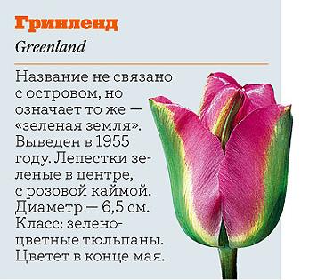 Фото №10 - Самые популярные сорта тюльпанов