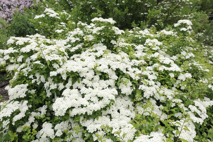 Фото №1 - Обнаружено растение с противовирусным эффектом