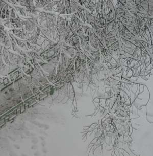 Фото №1 - Владивосток завалило снегом