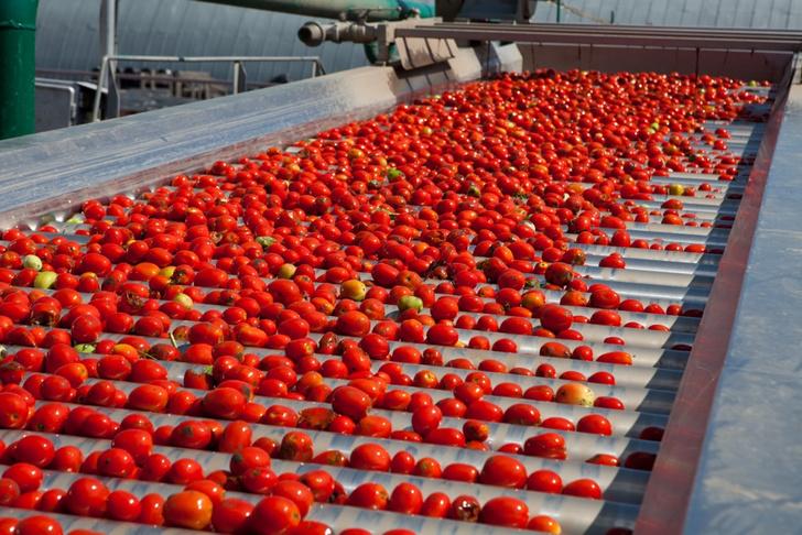 Фото №3 - Необычная экскурсия: как помидор становится томатной пастой ТМ «Помидорка»