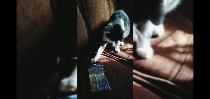 Фото №1 - Мобильные игры для котов: работают или нет? (видео)