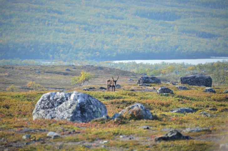 Фото №1 - Изменение климата заставило Арктику позеленеть
