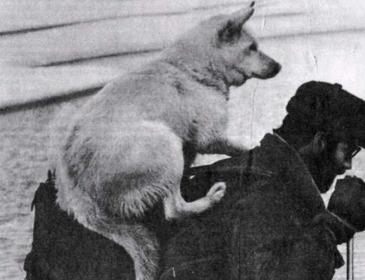 Фото №1 - Если бы не пес Якоб…