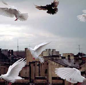 Фото №1 - В Нью-Йорке запретят кормить голубей