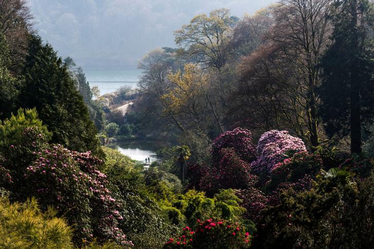 Фото №3 - Секретные миры: 7 таинственных британских садов