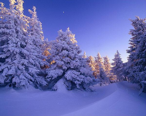 Фото №1 - К Новому году сама природа замирает