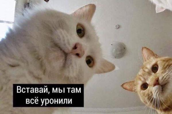 Фото №6 - Гороскоп в мемах: самые угарные предсказания на 12 октября 2020 ✨