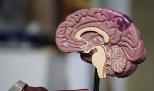 Фото №1 - Нервные клетки восстанавливаются. Петербургский невролог рассказал, как это происходит