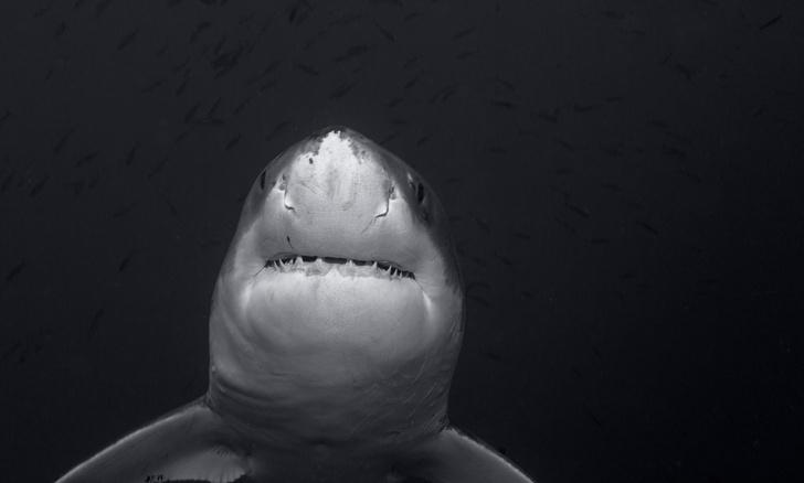 Фото №1 - В Рязанской области обнаружили останки древних акул