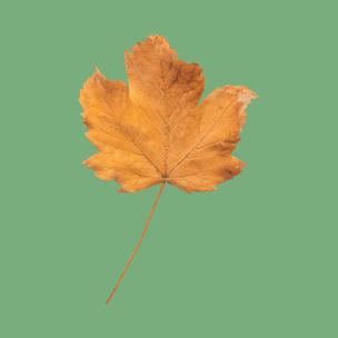 Фото №10 - Тест: Выбери осенний листок и узнай, с чем тебе придется расстаться в сентябре 🍂